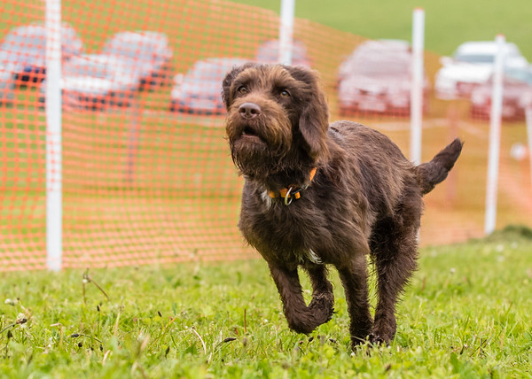 Dog's Trust Roz (69 of 1247)