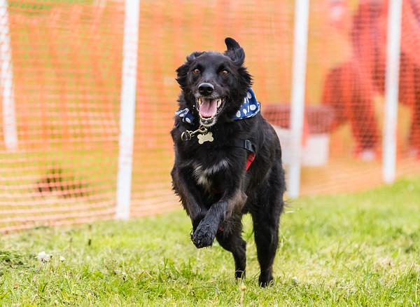 Dog's Trust Roz (33 of 1247)