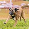 Dog's Trust Roz (1222 of 1247)