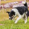 Dog's Trust Roz (911 of 1247)