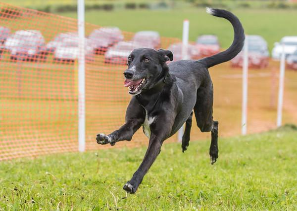 Dog's Trust Roz (104 of 1247)