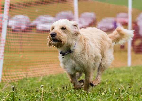 Dog's Trust Roz (84 of 1247)