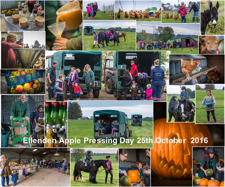 ellenden apple processing day