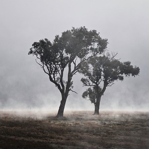 early winter morning in the Arboretum, Canberra