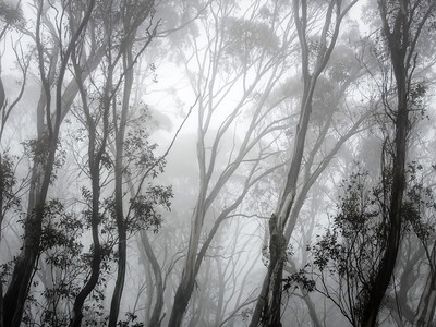 fading into the mist...