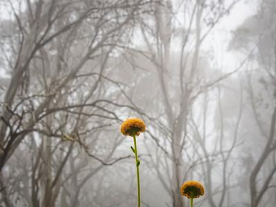 flower heads in the mist
