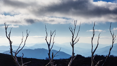 tree and mountain silhouettes