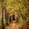 path through golden leaves