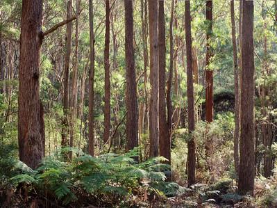 Monga National Park