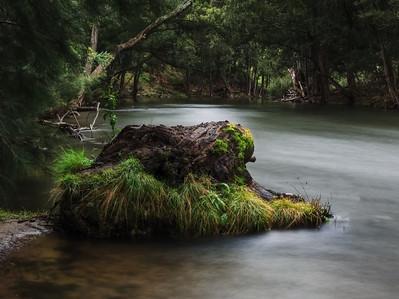 tree trunk in Goodradigbee river