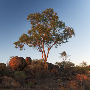 morning in Sturt National Park
