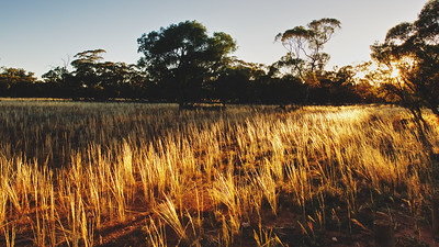 Sunrise in Mungo National Park