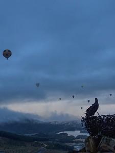 Canberra Balloon Festival (Eagle Nest)
