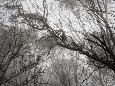 inot the mist...