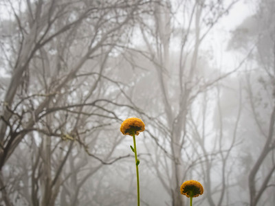 flower heads in the mist