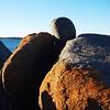 lichen on the rocks