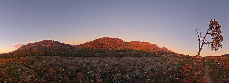 Morning at Wilpena Pound