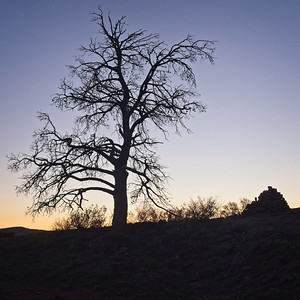 evening tree in Trezona