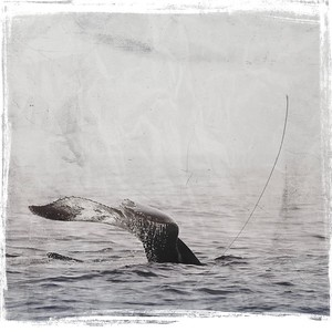 #TinyDreamImages Whale