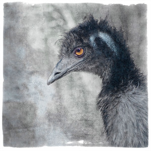 #TinyDreamImages Emu