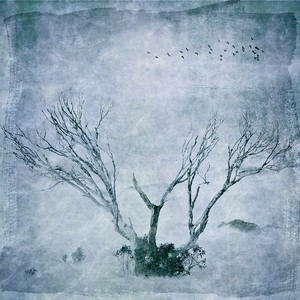 #TinyDreamImages Winter Tree