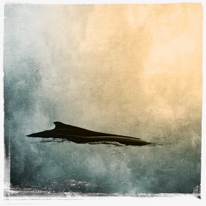 #TinyDreamImages A Whale of a Time