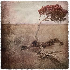 #TinyDreamImages Tree Gundabooka