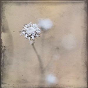 #TinyDreamImages Desert Flower