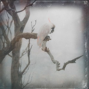 #TinyDreamImages Cockatoo Lunchtime