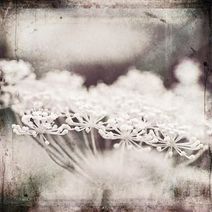 #TinyDreamImages Flower