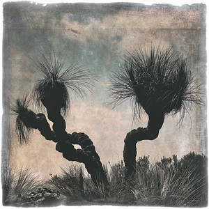 #TinyDreaImages Grass Tree