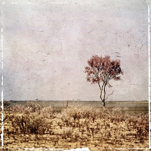 #TinyDreamImages Lonely Tree