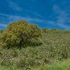 Portugal Wild Flowers
