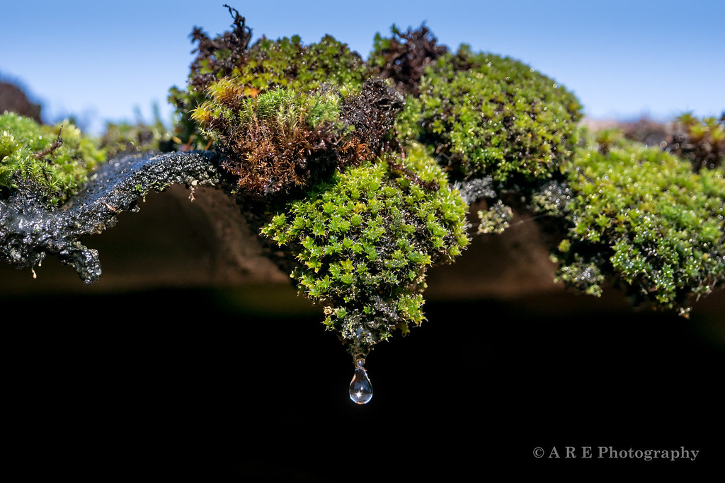 moss water droplet