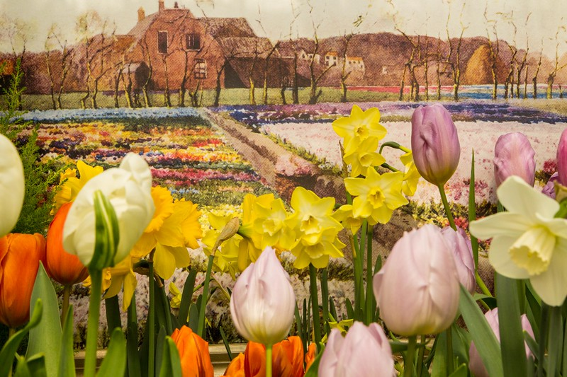 Tulips and daffodils, and a Mima Nixon painting