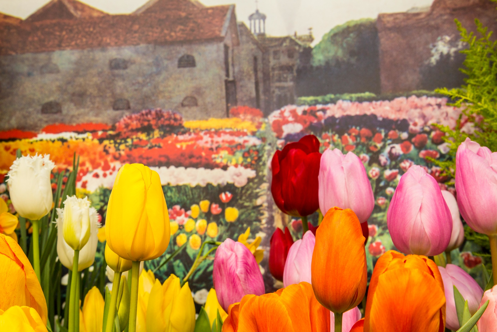 Tulips in the foreground, a painting in the background