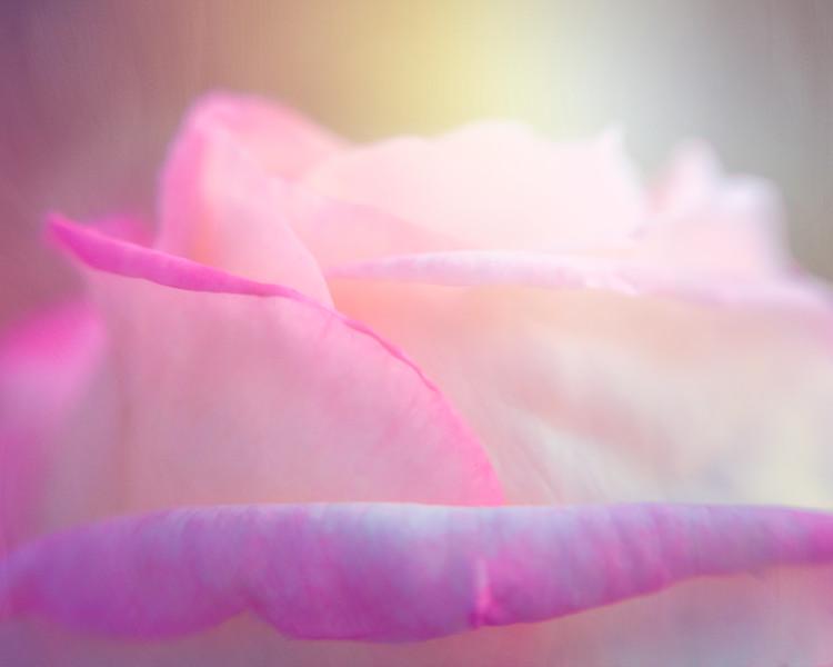 Rose Landscape