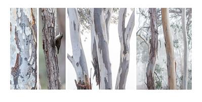 04_Pam Rooney Rhythm of trees
