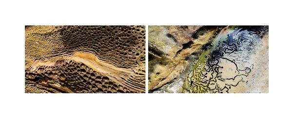 07_Ann Gibbs-Jordan_Sea shells by the sea shore