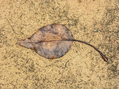 Judy_Another Leaf