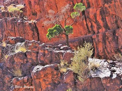 Barrie_04_Fire in Flinders Ranges_JPG