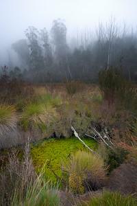 Fog On Pond