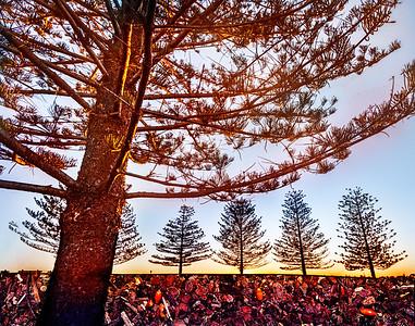 Foreshore Pines, Bermagui