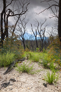 Recovery Kinglake National Park