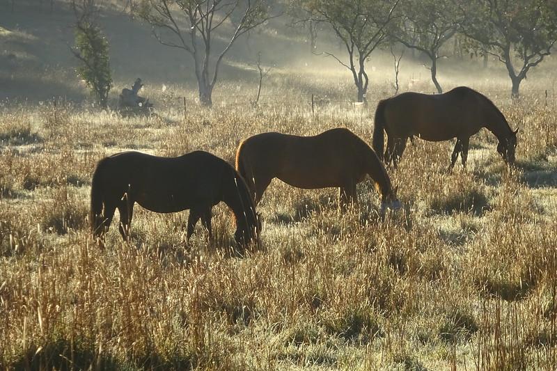 HorsesCookPaddock