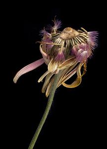 JudyParker_Flower_Departing-2MB