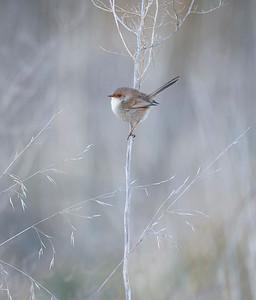 Bird Photo 2_JennyV