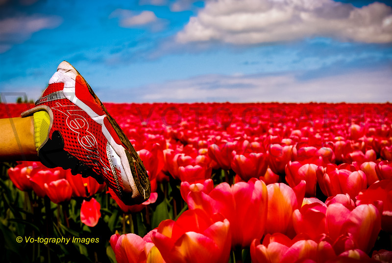 Fine Art - Red Zoot Shoes in Red Tulip Field-1-2