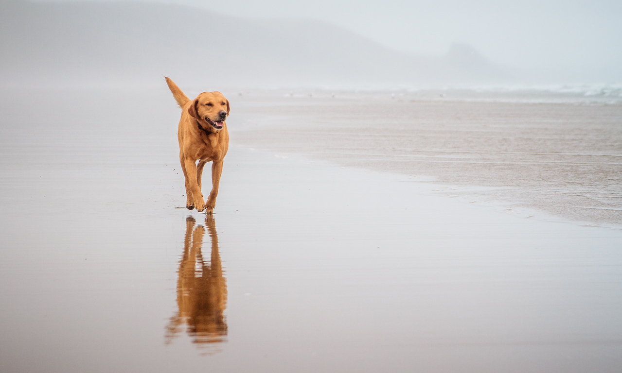 Lester on Newgale Sands