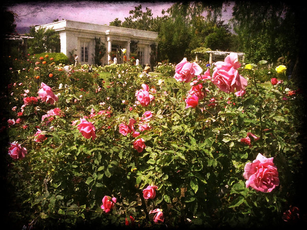 The Rose Garden and the Tea Room at the Huntington Gardens in Pasadena. I shot this with my iPhone 3Gs using the Camera Awesome app, which I'm really liking. The photos are a little sharper than in other apps and if you buy the whole suite of fx, filters, etc. for $9.99 there's a lot to choose from -- certainly more than Hipstamatic or Instagram.